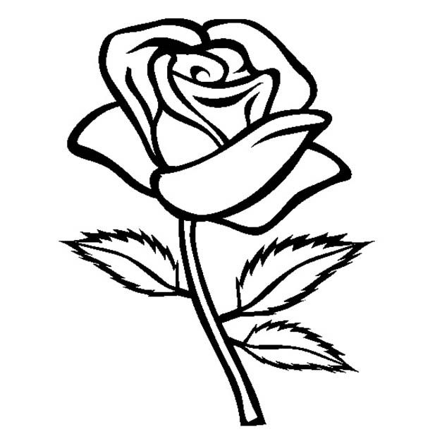 Cinescopio coloring pages of a rose ~ Rose with Three Leaves Coloring Page | Leaf coloring page ...