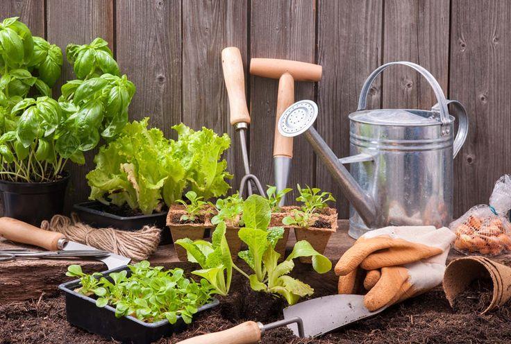 Todo lo que necesites para crear tu huerto en casa ``La esencia del Mediterráneo en tu hogar``