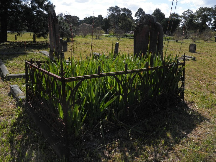 Old grave at Rookwood Cemetery, near the Necropolis Circuit.  You can see how high the grass gets around here.