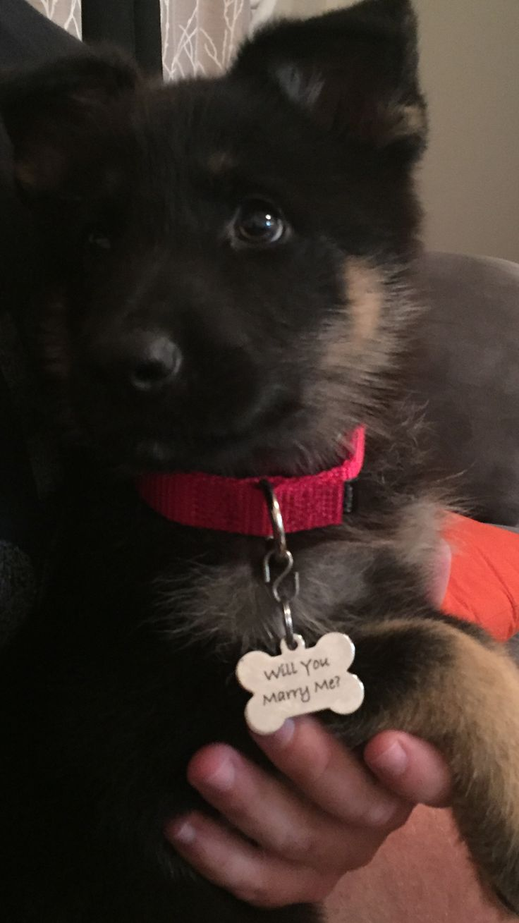 Puppy proposal is the best proposal! How could you say anything but YES!... And cry