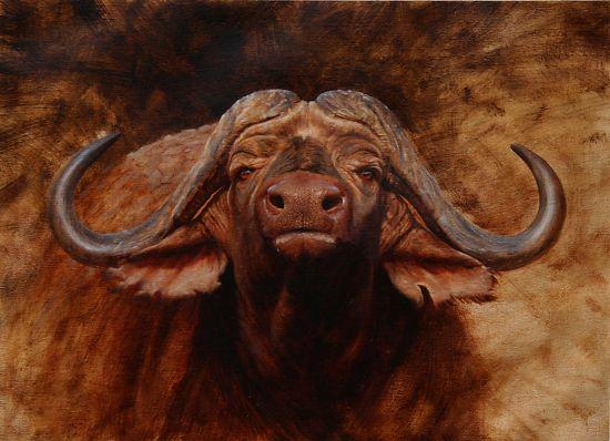 buffalo portrait by Peter Stewart Oil ~  x