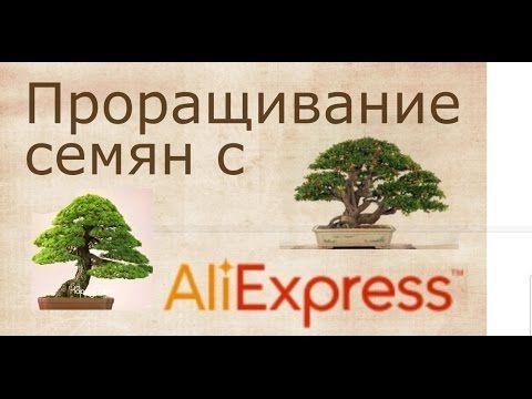 Опыт проращивания семян с Али-Экспресс. Бонсай