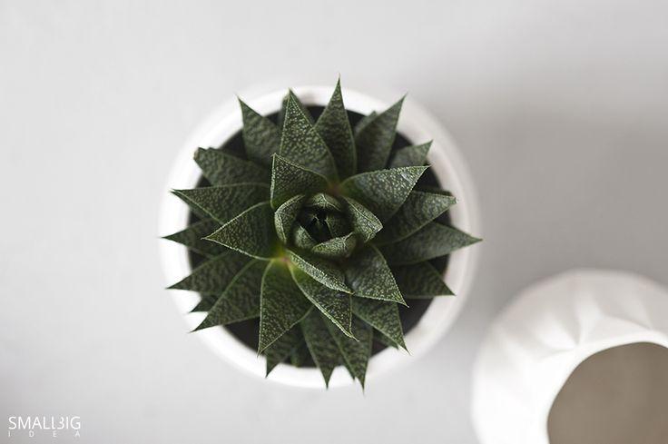 © smallbigidea.com geometry of plants.