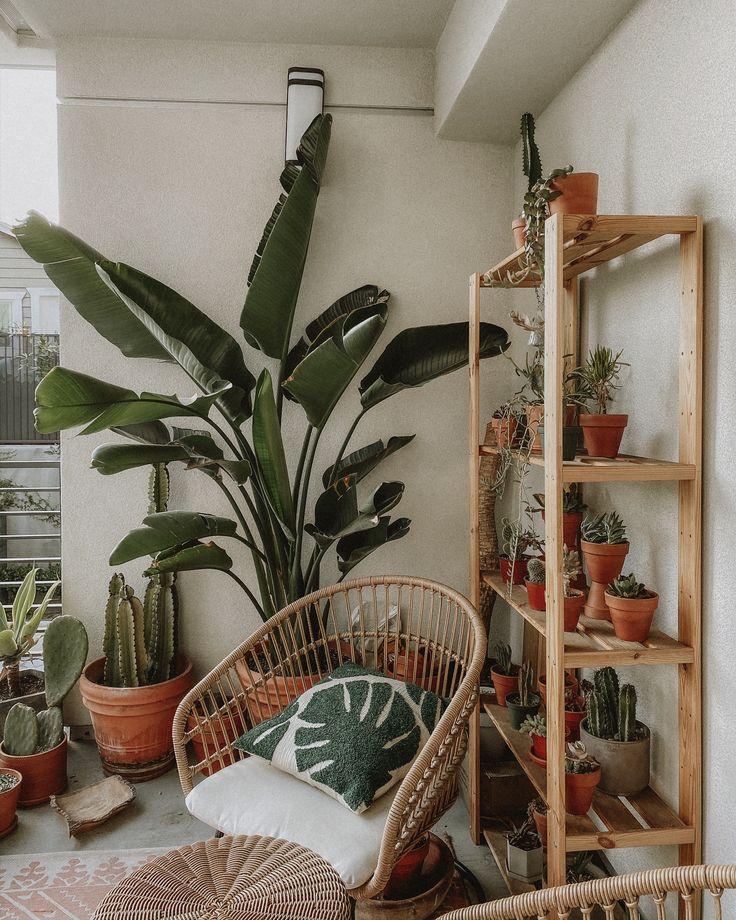 Euny and Burke, Patio Plants, Patio Garden, Patio Garden ...