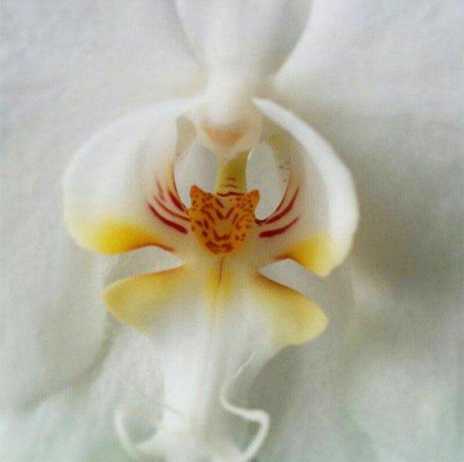 18 virág, amely ránézésre hihetetlenül hasonlít valami teljesen más dologra – BuzzBlog