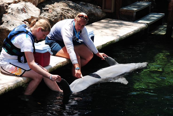 Trainer for a Day at Delphinus - Learning veterinary care