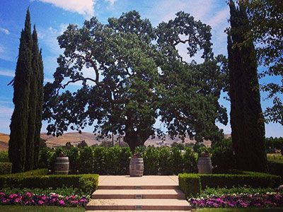 bella rosa at garre vineyard and winery and martinelli event center livermore california wedding venues 1