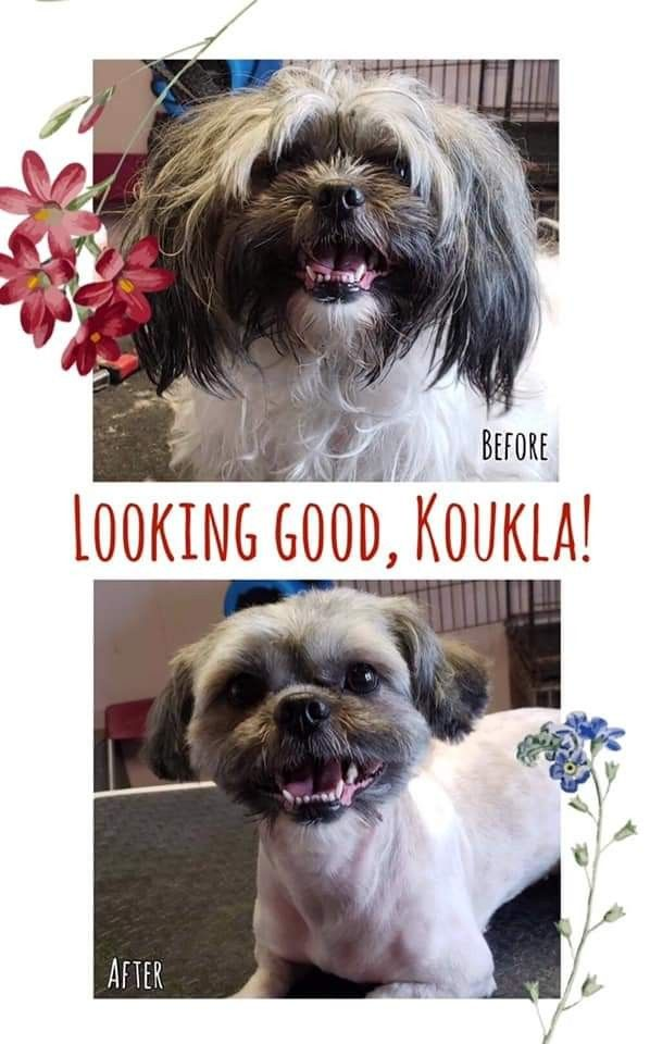 Pin By Groomer Ashlee Chicago On Grooming Chicago Groomer Animals Grooming