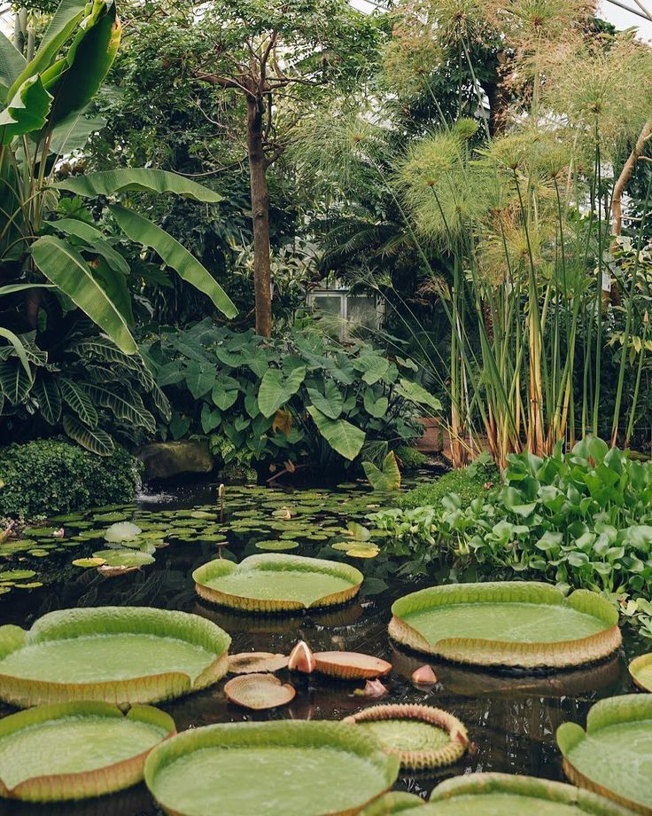 We post all of our greenhouse tours on our website - see the link in our profile to get lost in lush green worlds of all shapes and sizes. #HaarkonGreenhouseTour