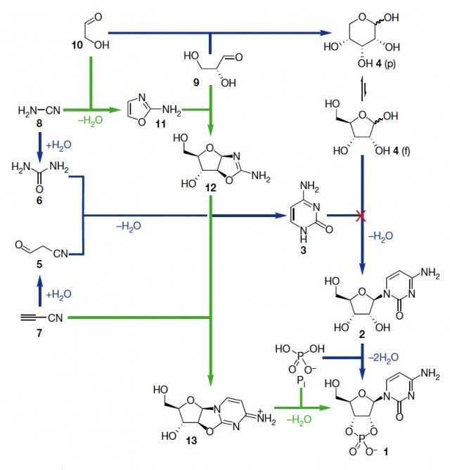 Esquema de la reacción de síntesis de ribonucleótidos de pirimidina propuesta por el grupo de Sutherland (en verde) frente a la aproximación intentada anteriormente en el campo de la química prebiótica (en azul, mostrando la etapa de condensación de la ribosa con la base nitrogenada que no llegaba a producirse). Figura tomada de Powner y col., 2009.