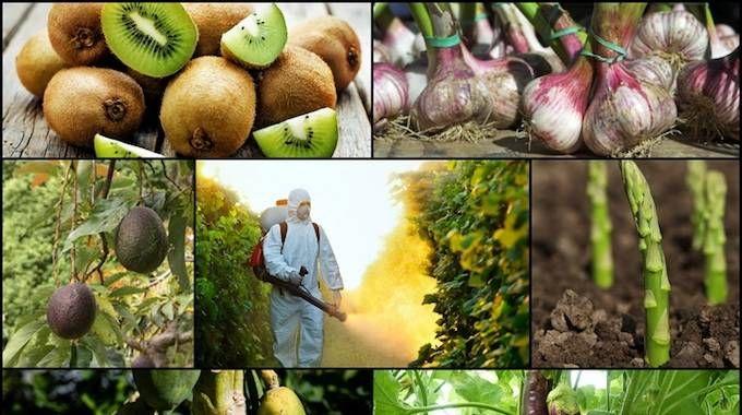 Le ministère de la Santé nous pousse à manger 5 fruits et légumes par jour.Le souci, c'est qu'en voulant bien faire, on mange aussi des produits bourrés de pesticide