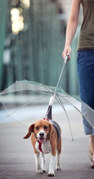 Win a Dog Umbrella for FREE!