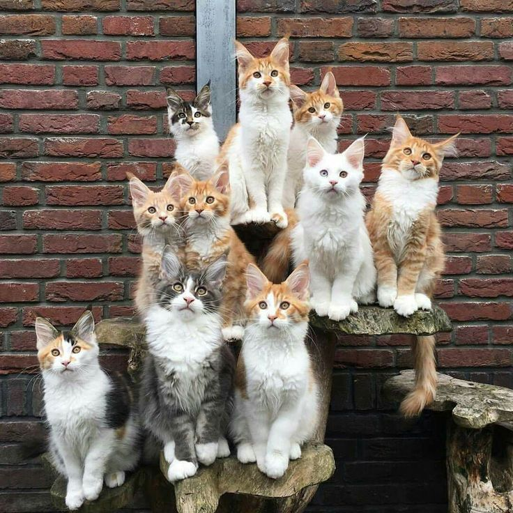 I don't know how anyone can get a group of cats to sit for a camera shot like this.