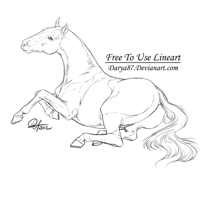 388 best images about Horse Drawings