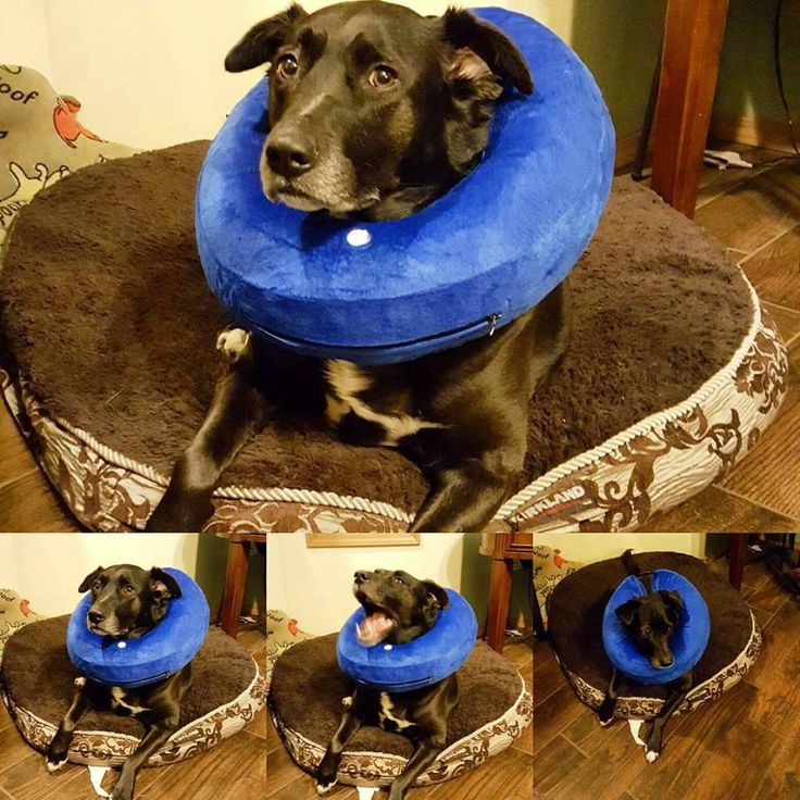 How To Treat A Dog S Hot Spot Naturally
