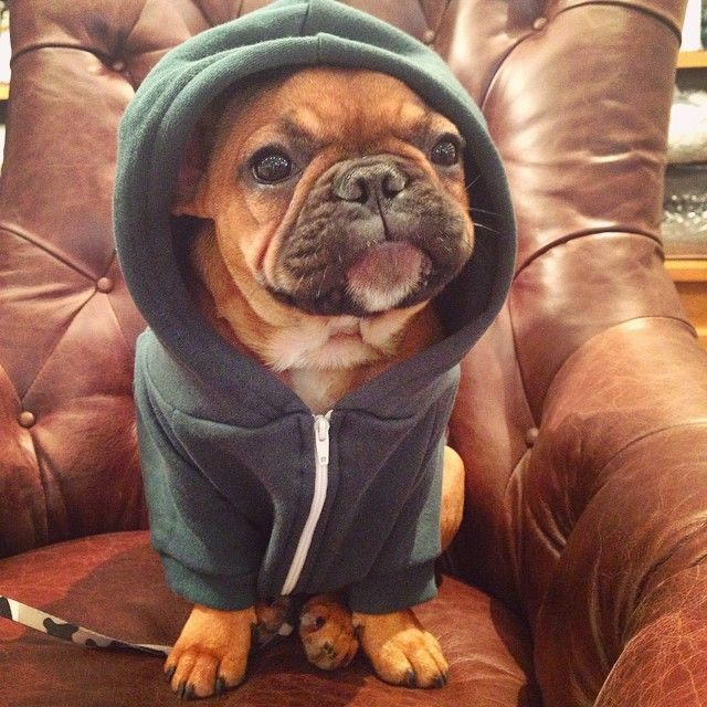 """Humph. Shopping is sooooo boring, But I do like my new Hoodie"" @americanapparelcanada by lentil_frenchbulldog http://ift.tt/1BaUlKx"