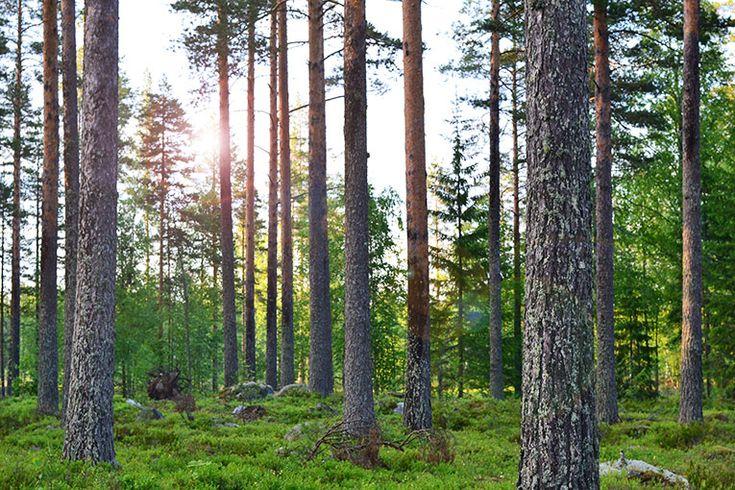 FINLAND DAY 8 - LAPPEENRANTA