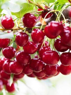 10 frutíferas de pequeno porte embelezam a casa e oferecem delícias frescas - 13/11/2016 - UOL Estilo de vida