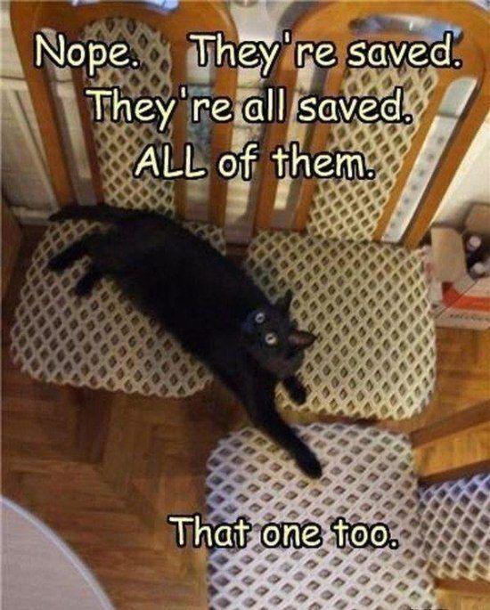 I love animal pics with funny sayings!!