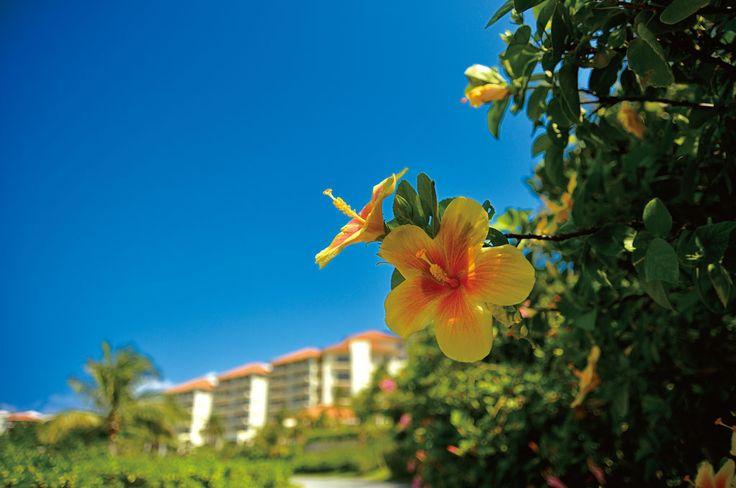 ザ・ブセナテラス | 沖縄リゾートホテル