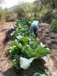 Grampari's Organic Garden