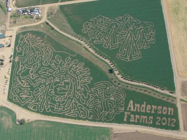 corn maze - anderson farms in eerie | colorado-an ...
