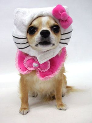 Hello Kitty Chihuahua... love it!: Detailed Cost, Puppies, Hello Kitty Costumes, Dresses Up, Halloween Costumes, Dogs Costumes, Pet, Chichi, Chihuahua