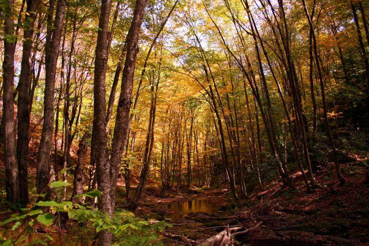 Googles billedresultat for http://images.forestfoliage.com/wp-content/original/2010_08/fall-trees-creek-autumn-trail.jpg