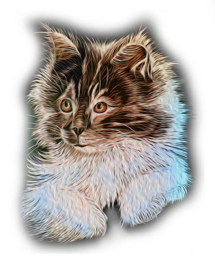 Fluffy KITTEN #KITTEN by Simon knott Artist animals and wildlife art
