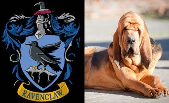 These 7 Questions Will Determine Your Hogwarts House And Patronus