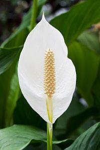 Lifestyle - 5 Benefits of Indoor Plants
