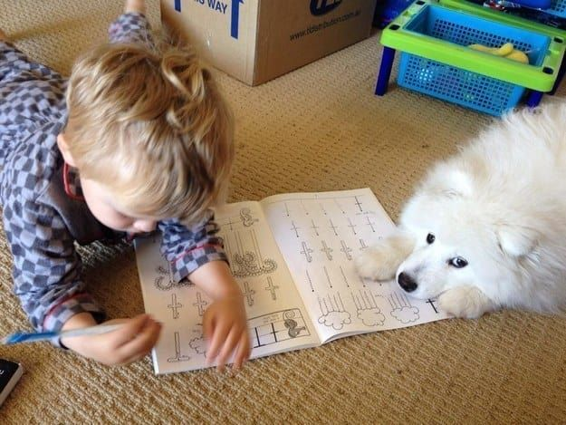 The 100 Most Important Puppy Photos Of All Time – 58. The Coloring Expert; If you're in the mood for a serious coloring session, this fluffy guy will stick right by your side and hand you whatever crayons you need. http://www.pindoggy.com/pin/the-100-most-important-puppy-photos-of-all-time-58-the-coloring-expert-if-youre-in-the-mood-for-a-serious-coloring-session-this-fluffy-guy-will-stick-right-by-your-side-and-hand-you-whatever-cr/