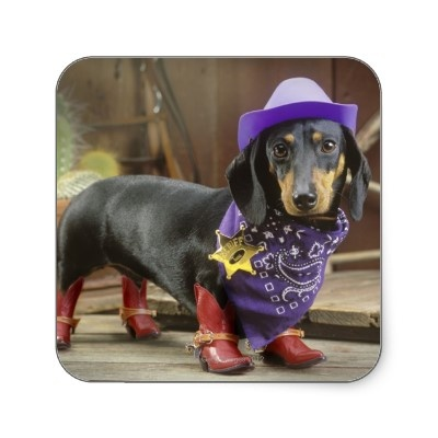 Image result for cowboy dachshund costume