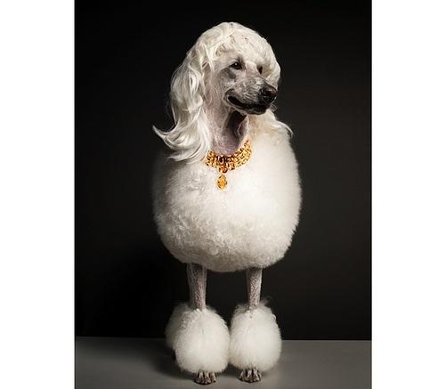 Torkil Gudnason / Dogs with Wigs