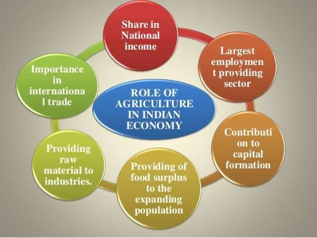 Role Of Agriculture In Indian Economy India Essay
