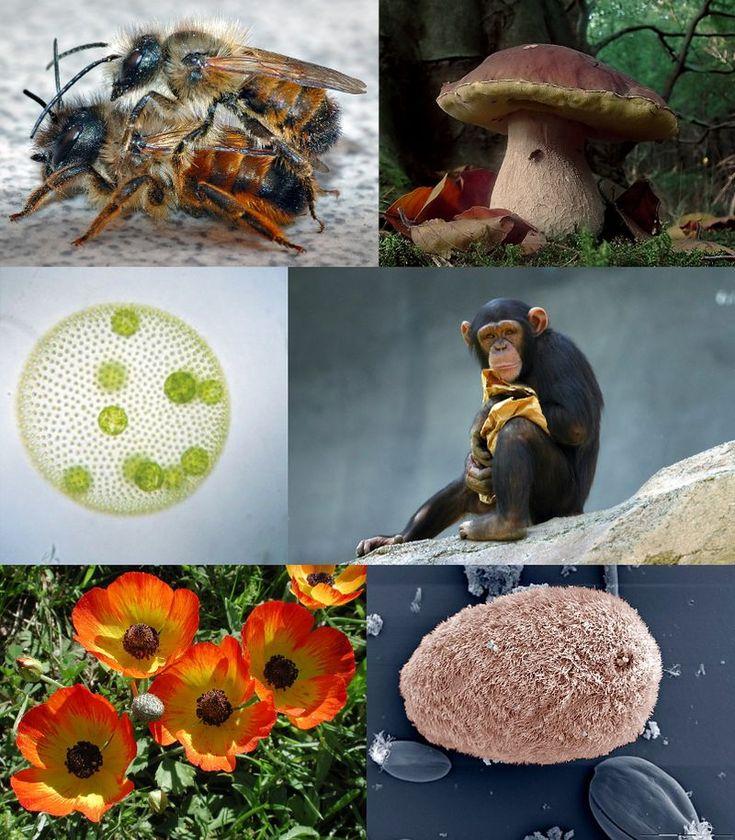 Eukaryota diversity 2 - Eukaryote - Simple English Wikipedia, the free encyclopedia