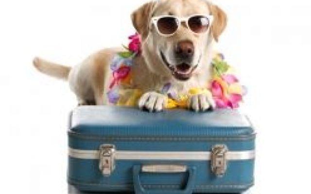 Alimentazione naturale anche in vacanza In questo articolo, la Dottoressa Silvia Cattani, medico veterinario esperta in alimentazione, ci spiega come dare alimentazione naturale al nostro cane anche in vacanza.  Seguici su www.discoevryd #cane #cani #alimentazione #nutrizione