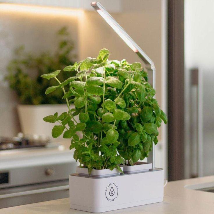 Indoor Smart Garden In 2020 With Images Smart Garden 400 x 300