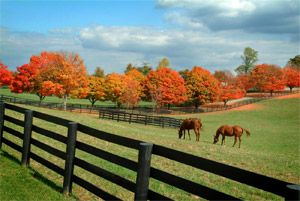Kentucky horse farm in the fall. Gotta have lots of open land and fences like this!