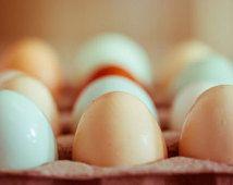 Photography Rústico, el arte de la cocina, impresiones de huevo, país, granja, pollos, colores neutros, azul, crema, casa rural, gran arte, fotografía de alimentos