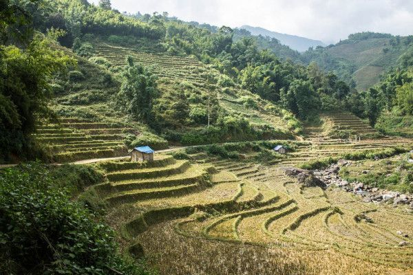 Tiered rice paddies on every corner of the mountains