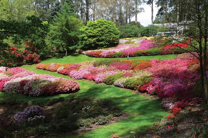 National Rhododendron Gardens in spring :: Dandenong Ranges, Victoria, Australia - I love going here. Wish I could go again!