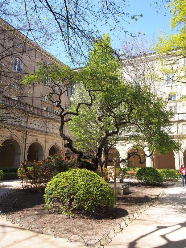 Le jardin du palais Saint Pierre Musée des beaux arts à Lyon, au printemps! Un…