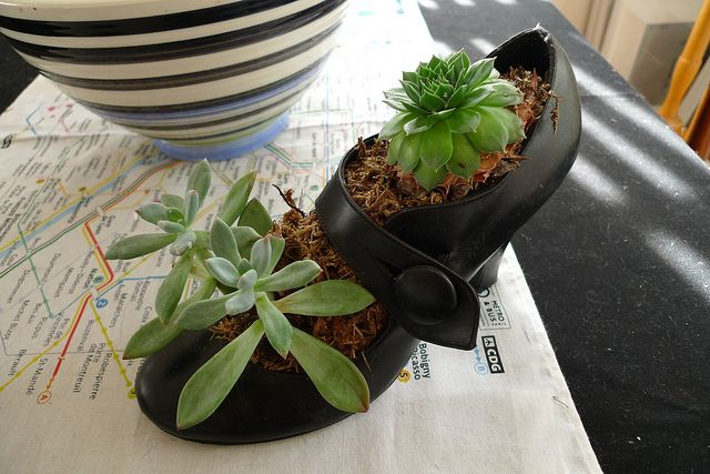 shoe planter by cuttlefish, via Flickr