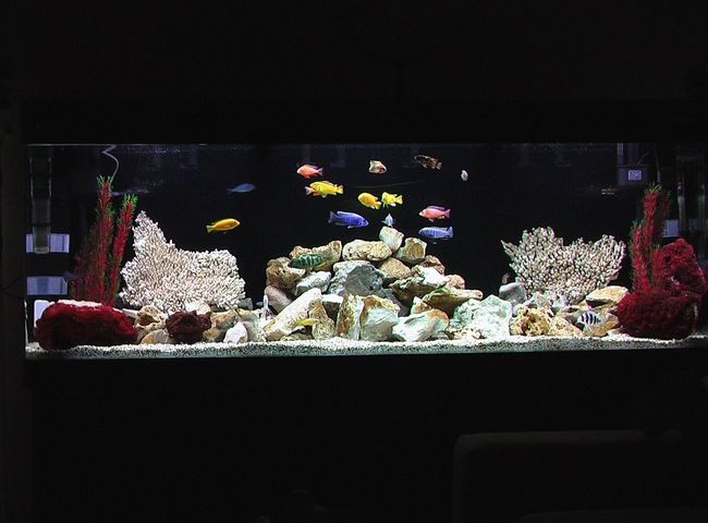 15 best images about fish tanks on pinterest finding for Finding nemo fish tank