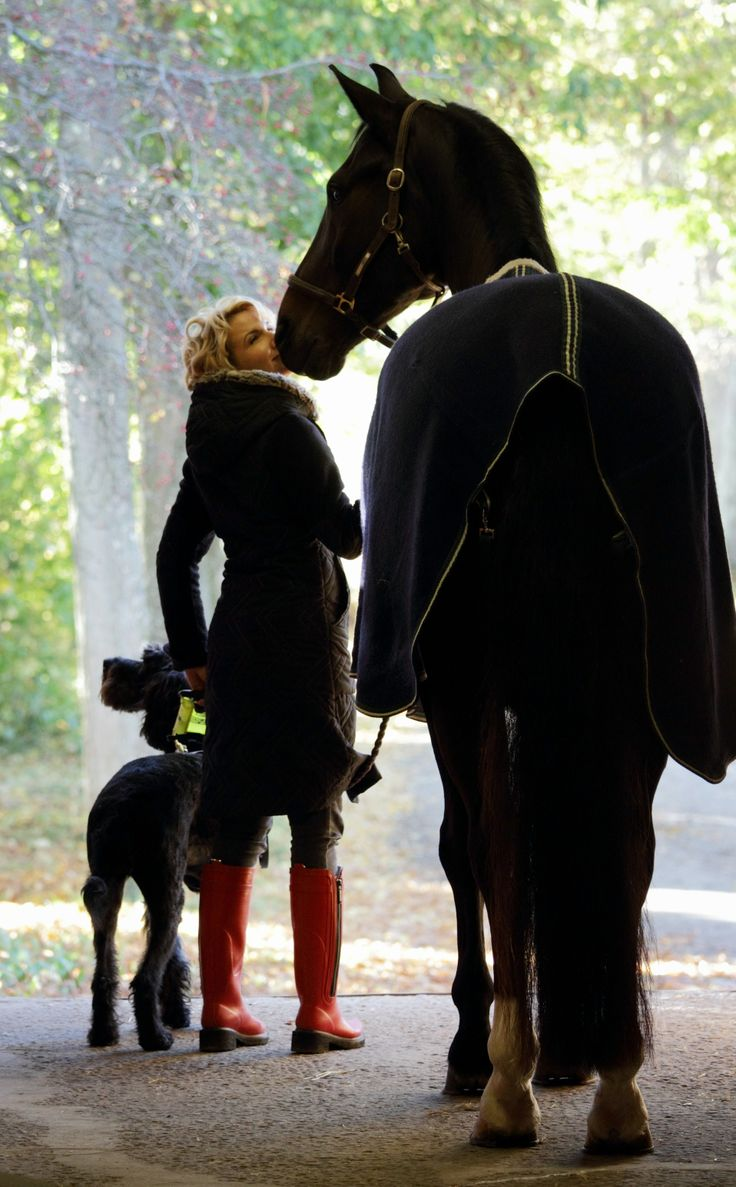 423 best horse related images on pinterest | horses, equestrian