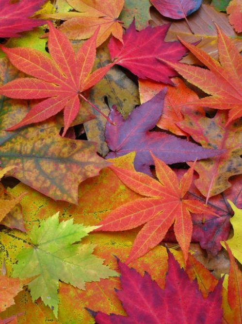rainbow of #leaves