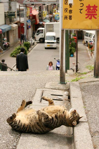 猫画像の画像13枚目!