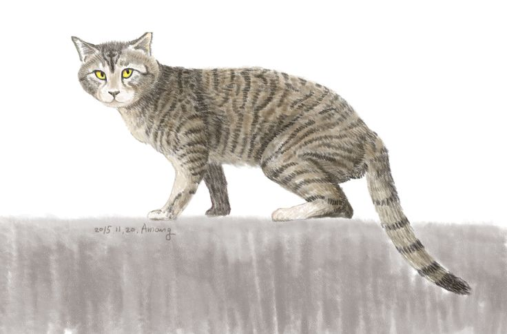 길고양이-경주성건동