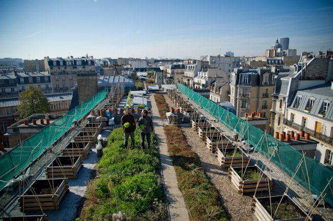 Un potager sur les toits de Paris - Portail public de l'alimentation